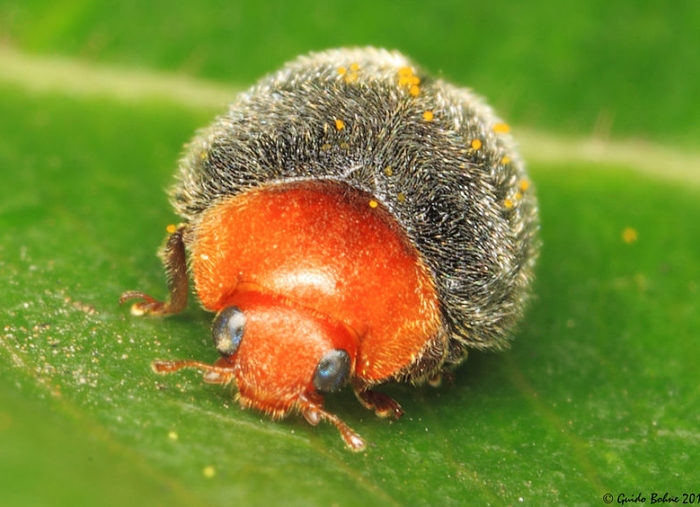 Beneficial Bugs: Natural Pest Control
