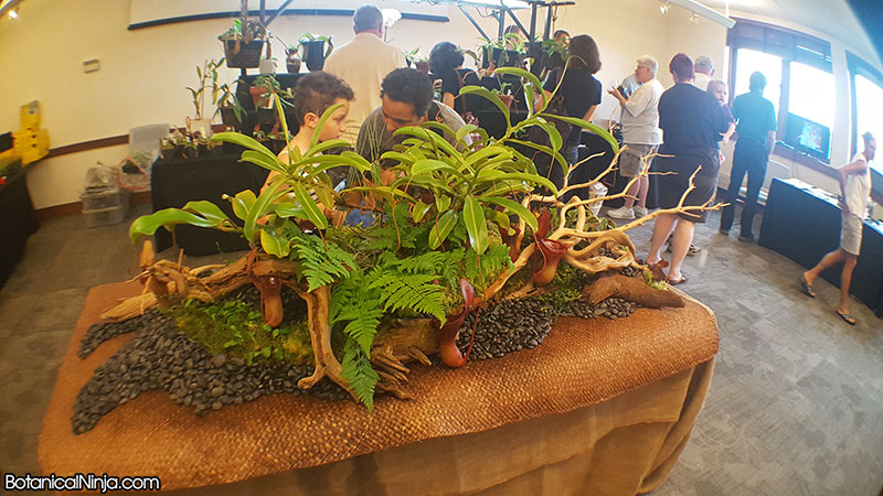 Matt Kaelin's amazing carnivorous plant display at the show!