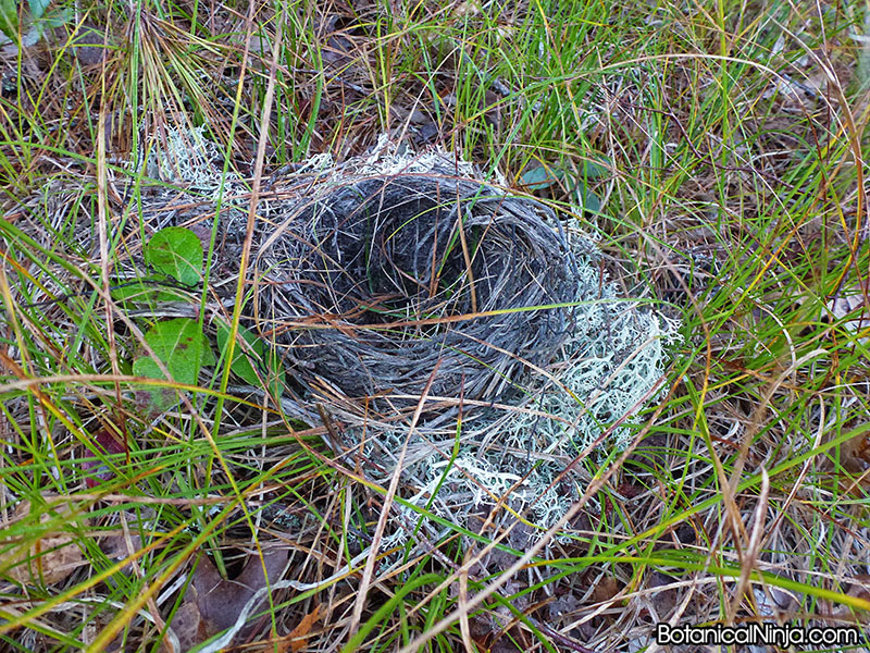 A fallen bird nest I found on our way out, I would definitely use the lichens as cushion if I were a bird